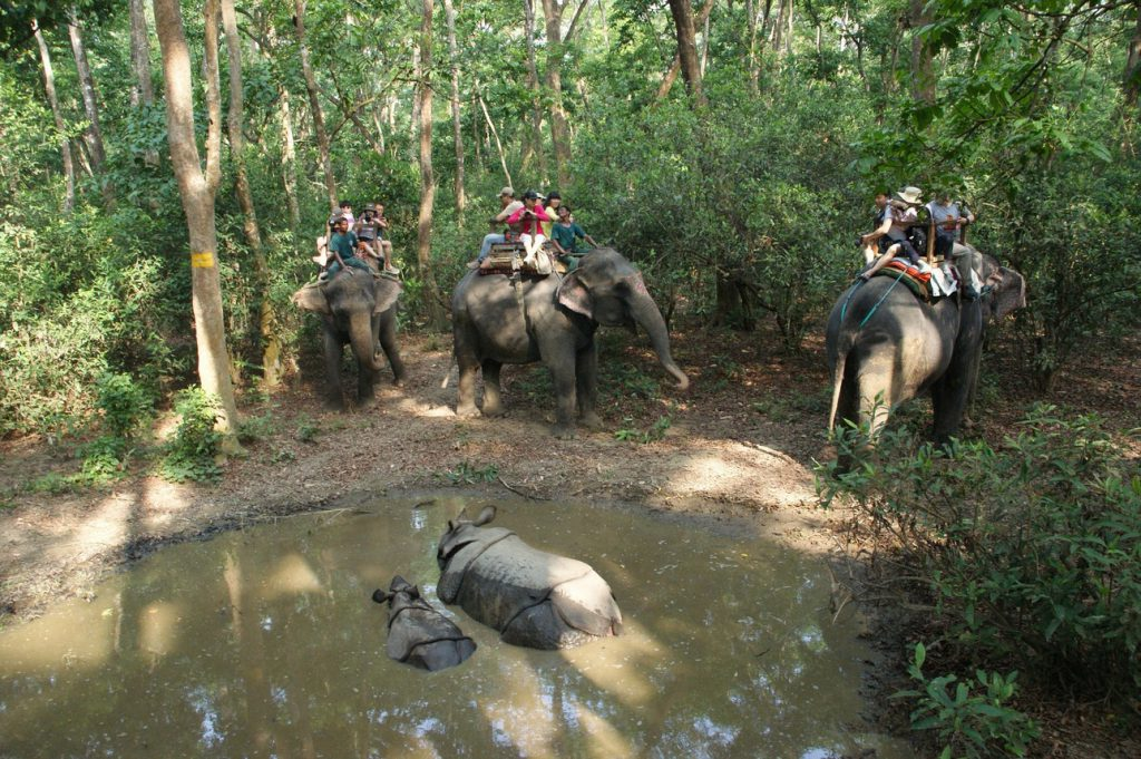 elephant ride at chitwan national park